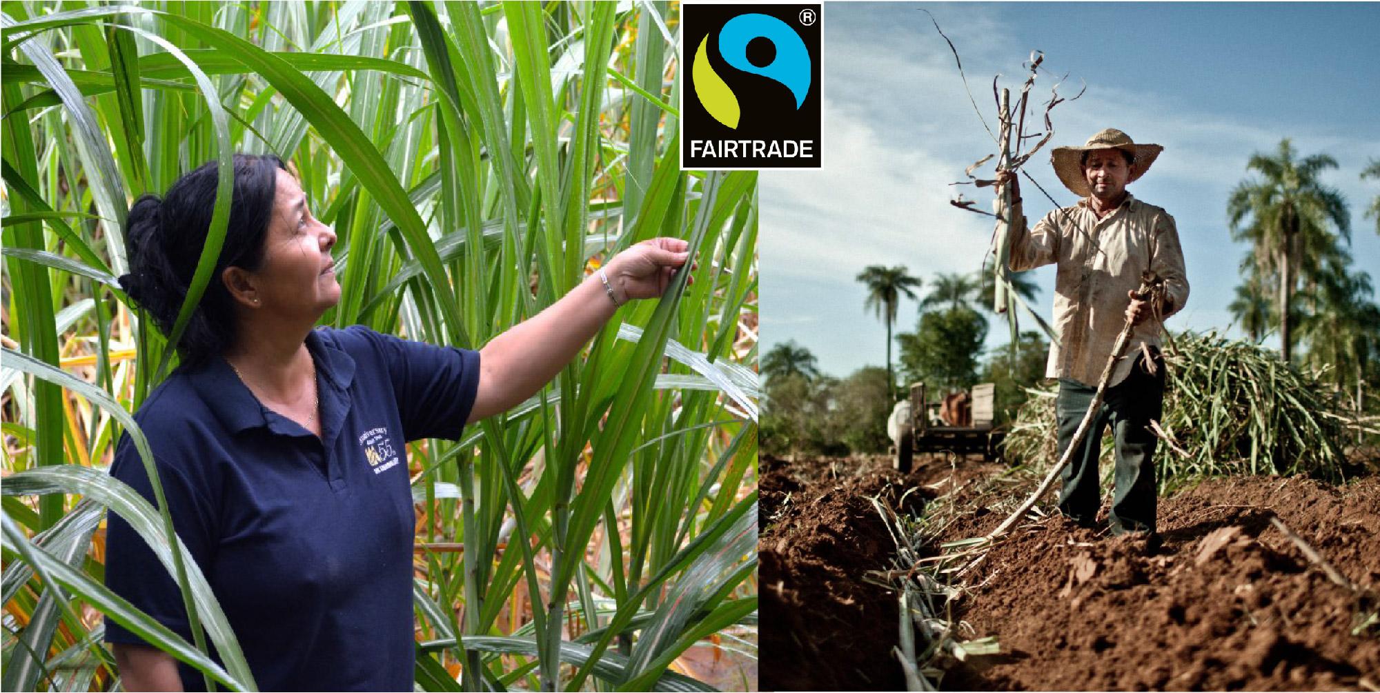 オーガニックエタノールの産地パラグアイの 原料となるサトウキビ畑で働いている方々
